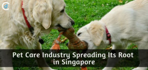 Pet Care Industry Spreading Its Root in Singapore